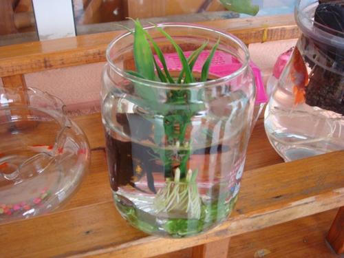 植物角瓶子设计